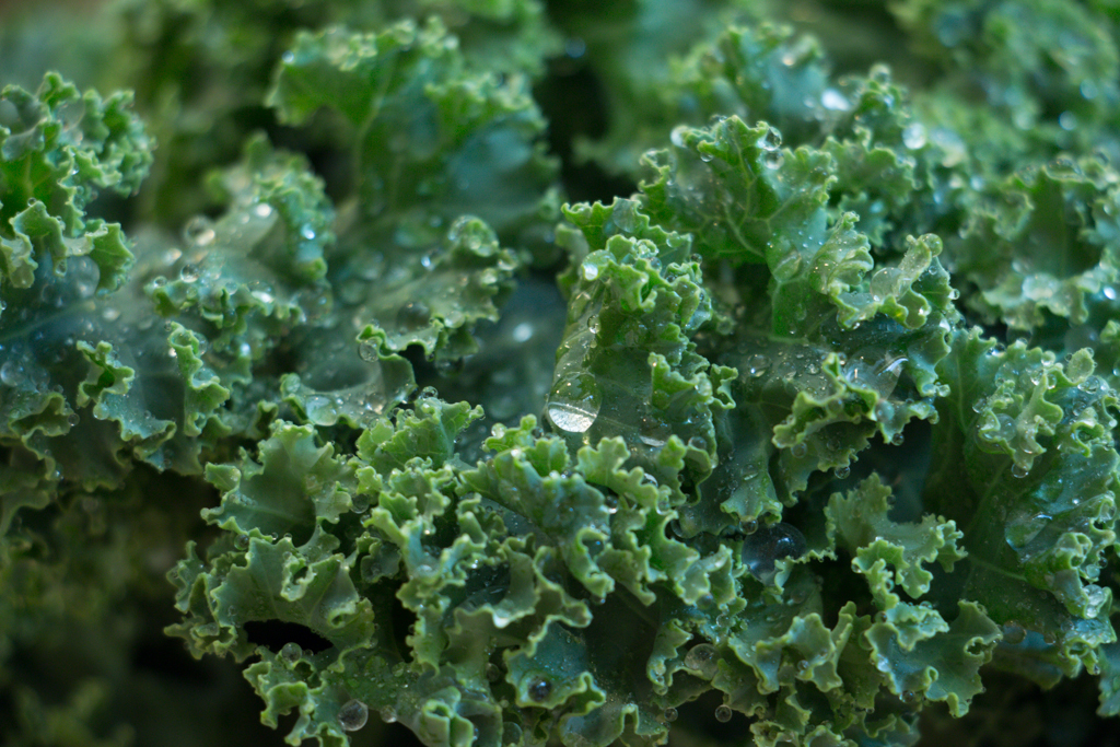 Fresh kale with water droplets