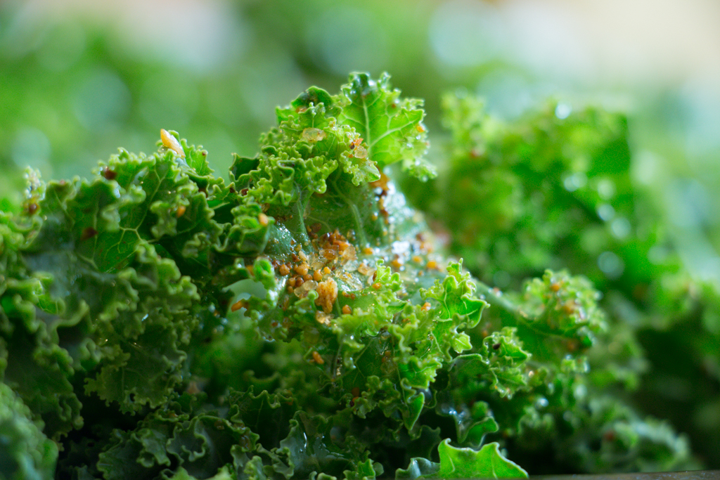 Kale with McCormick's SmokeHouse Maple Barbecue Seasoning